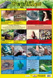 Reptiles Of The World Prints