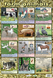 Farm Animals Posters