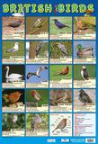 British Birds Affiche
