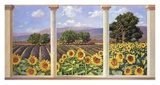 Finestra sui girasoli Prints by Andrea Del Missier