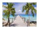 Pier and coconut trees, Fakarava, French Polynesia Prints by Holger Leue