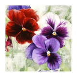 Pansies I Prints by Jenny Thomlinson