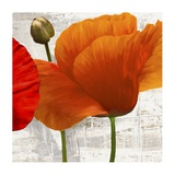 Summer Poppies II Prints by Jenny Thomlinson