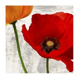 Summer Poppies I Prints by Jenny Thomlinson
