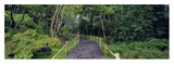 Tea Garden Walkway, San Francisco Botanical Gardens Prints by Richard Berenholtz