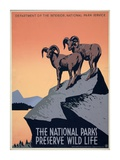 The National Parks Preserve Wild Life, ca. 1936-1939 Print by J. Hirt