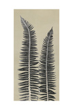 Cocoa Ferns Poster by Mary Margaret Briggs