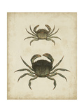 Crustaceans IV Print by James Sowerby