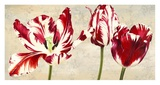 Tulipes Royales Prints by Luca Villa