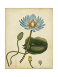 Blue Water Lily Poster by Henry Andrews