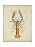 Crustaceans I Prints by James Sowerby