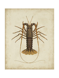 Crustaceans II Poster af James Sowerby