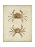 Crustaceans VI Posters af James Sowerby