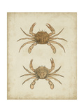 Crustaceans VI Posters by James Sowerby