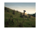 Wooly Friends II Premium Giclee Print by Lillian Bell
