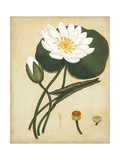 White Water Lily Prints by Henry Andrews