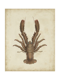 Crustaceans III Plakater af James Sowerby