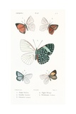 Lepidopteres 4, Emile Blanchard Posters by  Porter Design