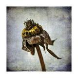 Grunge Remnants VII Premium Giclee Print by Honey Malek