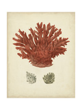 Antique Red Coral III Premium Giclee Print by  Vision Studio