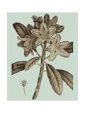 Flowering Trees IV Premium Giclee Print by  Vision Studio