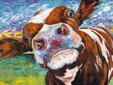 Curious Cow I Giclee-tryk i høj kvalitet af Carolee Vitaletti