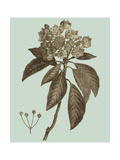 Flowering Trees V Premium Giclee Print by  Vision Studio