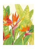 Watercolor Tropical Flowers IV Art par Tim OToole