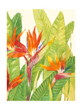 Watercolor Tropical Flowers IV Premium Giclee Print by Tim OToole