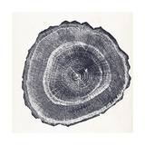 Tree Ring III Print by  Vision Studio
