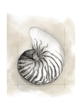 Shell Schematic II Kunst på  metal af Megan Meagher