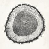 Tree Ring II Kunstdrucke von  Vision Studio