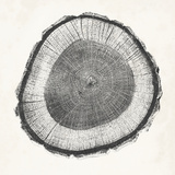 Tree Ring II Prints by  Vision Studio