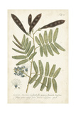 Miller Ferns I Posters by Phillip Miller