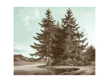 Serene Trees III Premium Giclee Print by Edward Kennion