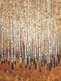 Sienna Birches I Premium Giclee Print by Tim OToole