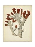 Antique Red Coral VI Premium Giclee Print by  Vision Studio