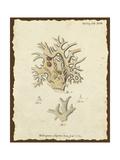 Natura Coral VI Premium Giclee Print by Johann Esper