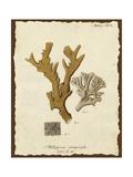 Natura Coral I Premium Giclee Print by Johann Esper