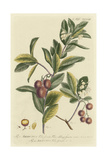 Miller Foliage and Fruit I Posters by Phillip Miller