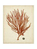Antique Red Coral IV Prints by  Vision Studio