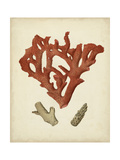 Antique Red Coral II Premium Giclee Print by  Vision Studio