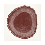 Tree Ring I Poster by  Vision Studio