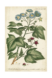 Chambray Botanical I Posters by Phillip Miller