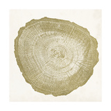 Tree Ring IV Prints by  Vision Studio