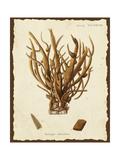 Natura Coral V Prints by Johann Esper