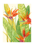 Watercolor Tropical Flowers III Posters by Tim OToole