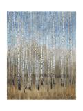 Dusty Blue Birches II Premium Giclee Print by Tim OToole