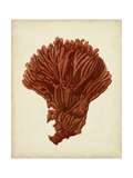 Antique Red Coral I Premium Giclee Print by  Vision Studio