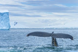 A Humpback Whale Tail Near Paradise Harbor, Antarctica Photographic Print by Ralph Lee Hopkins